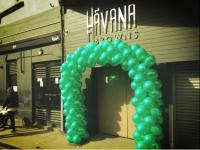 Havana Browns - image 1